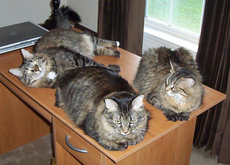 cats130