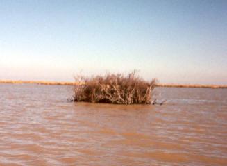 Lake blind