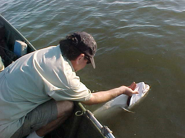 Joe releasing a redfish back into the Gulf of Mexico.
