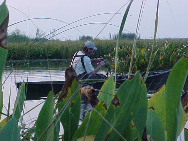Joe in the pirogue picking up the decoys.